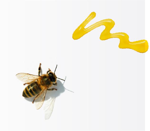 日新蜂蜜とは